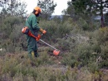 La Junta licita tratamientos silvícolas para la prevención de incendios en la comarca de Boedo-Ojeda por más de 396.000 euros
